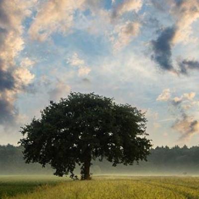 Bandeau paysage arbre
